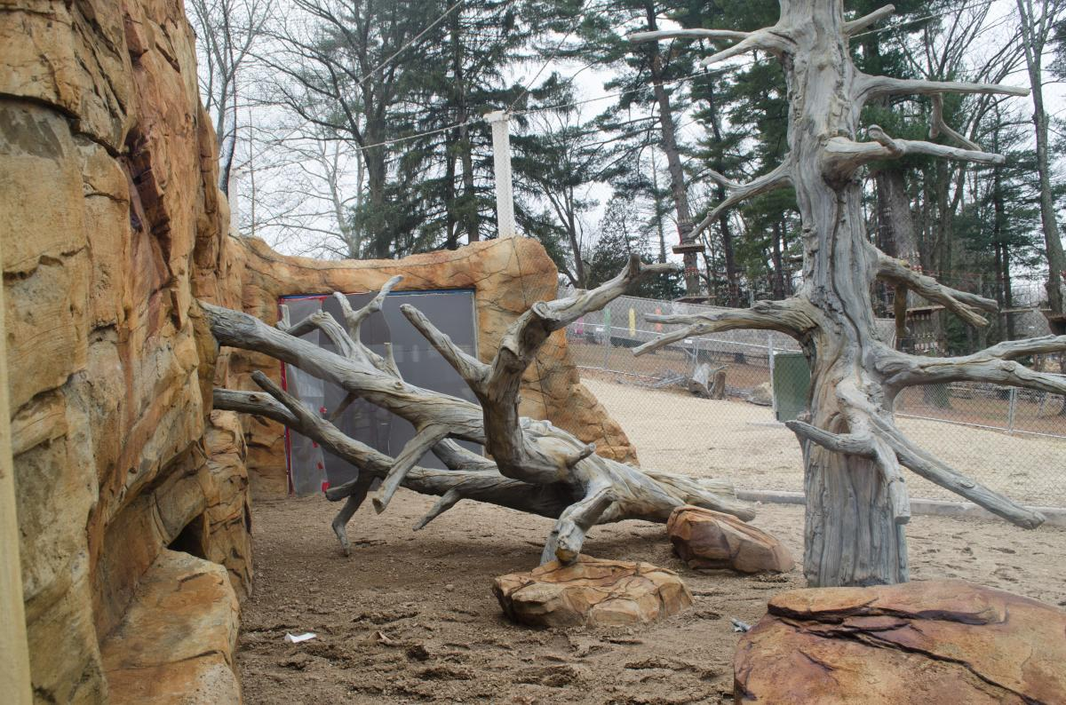 The fallen trees can be used as ramps by the exhibit's resident jaguars