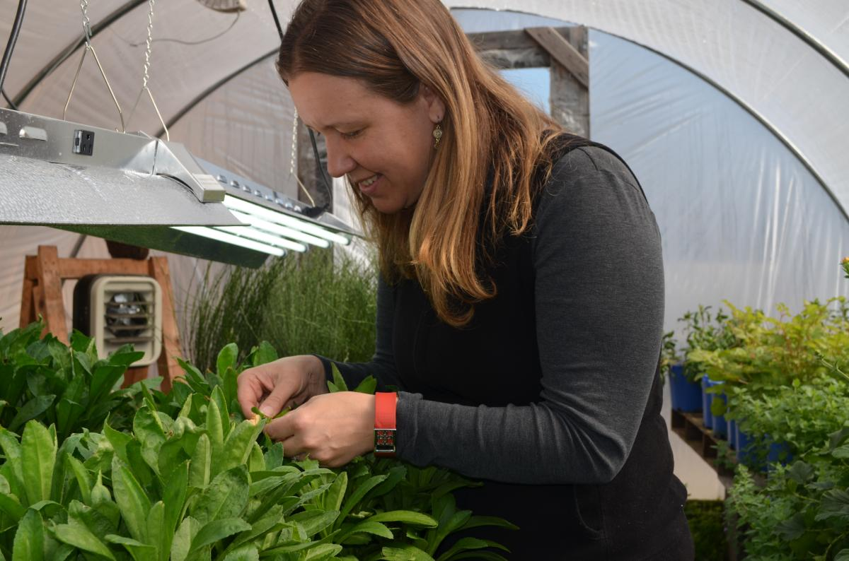 Lauren Hilburn and her team are hard at work preparing for the 2017 Philadelphia Flower Show