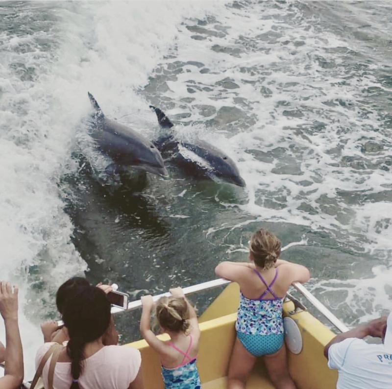 Rudee Rocket Dolphins