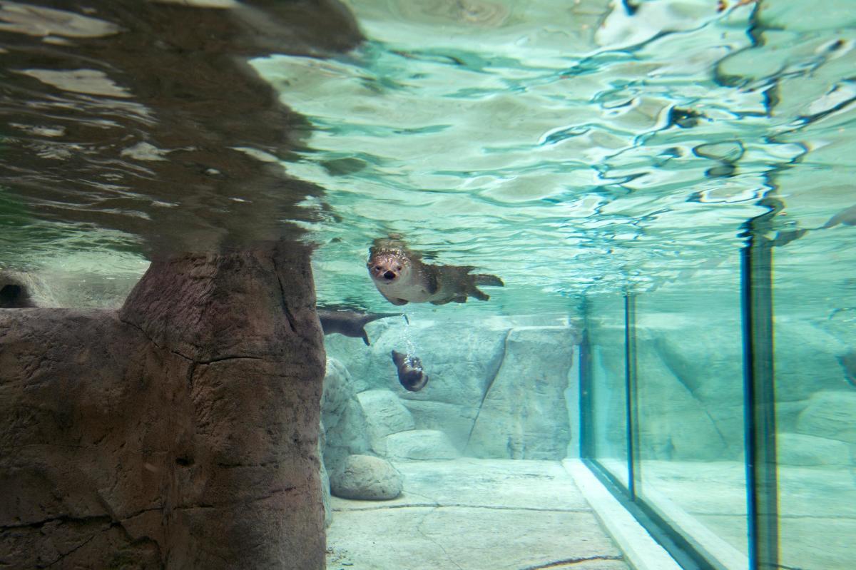 New York Times_TN Aquarium_Robert Rausch
