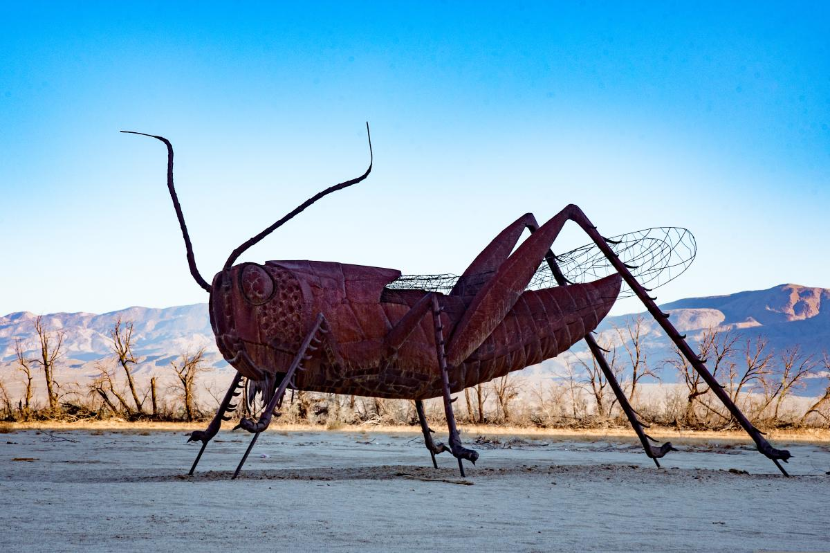 Borrego Springs Cricket Sculpture