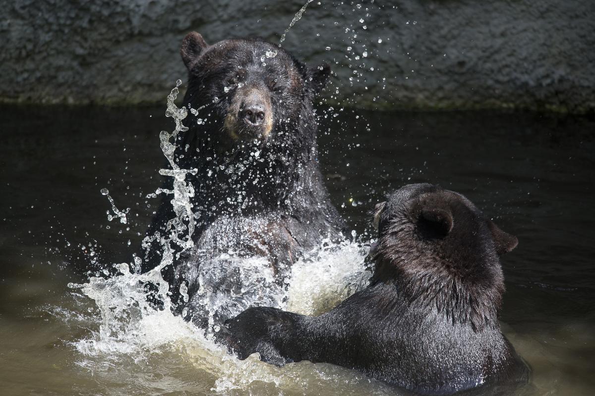 Tampa's Lowry Park Zoo Bear