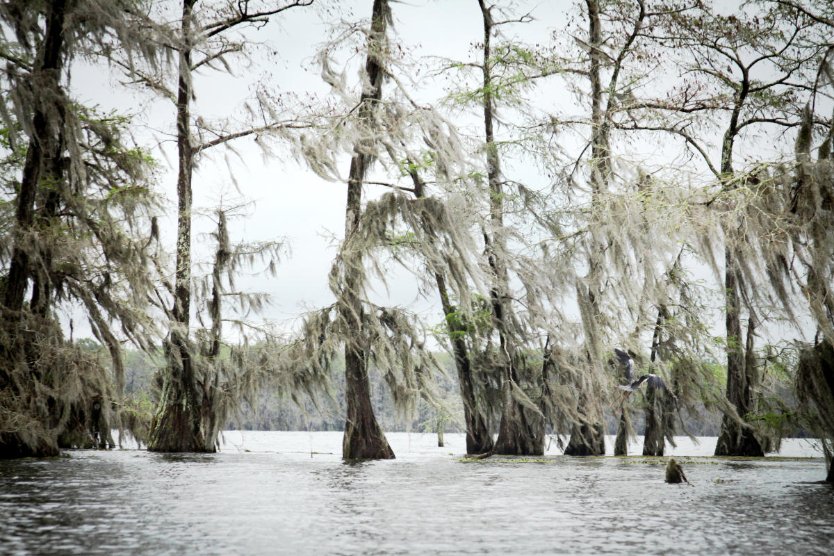 Lake Martin Trees And Wildlife In Lafayette La