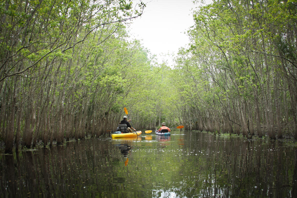 Bayou Vermilion Excursion