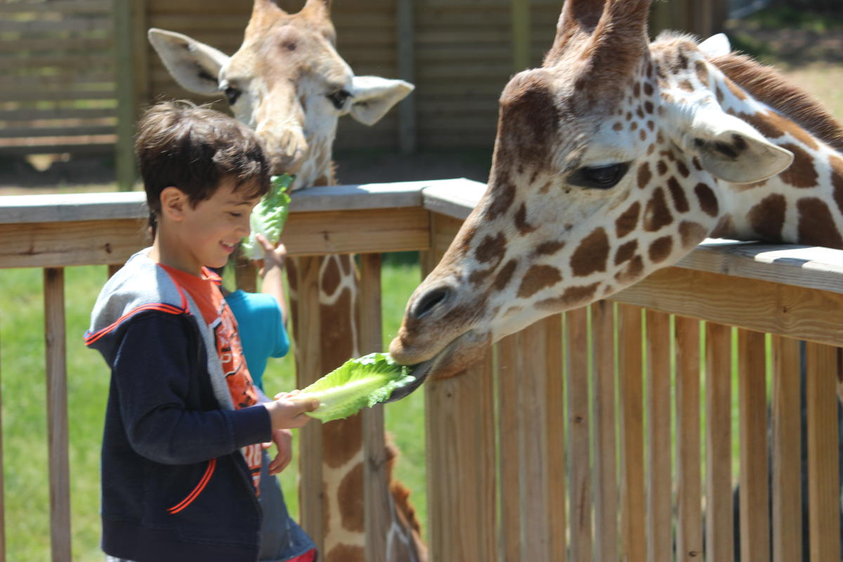 Elmwood Park Zoo Giraffe Feeding