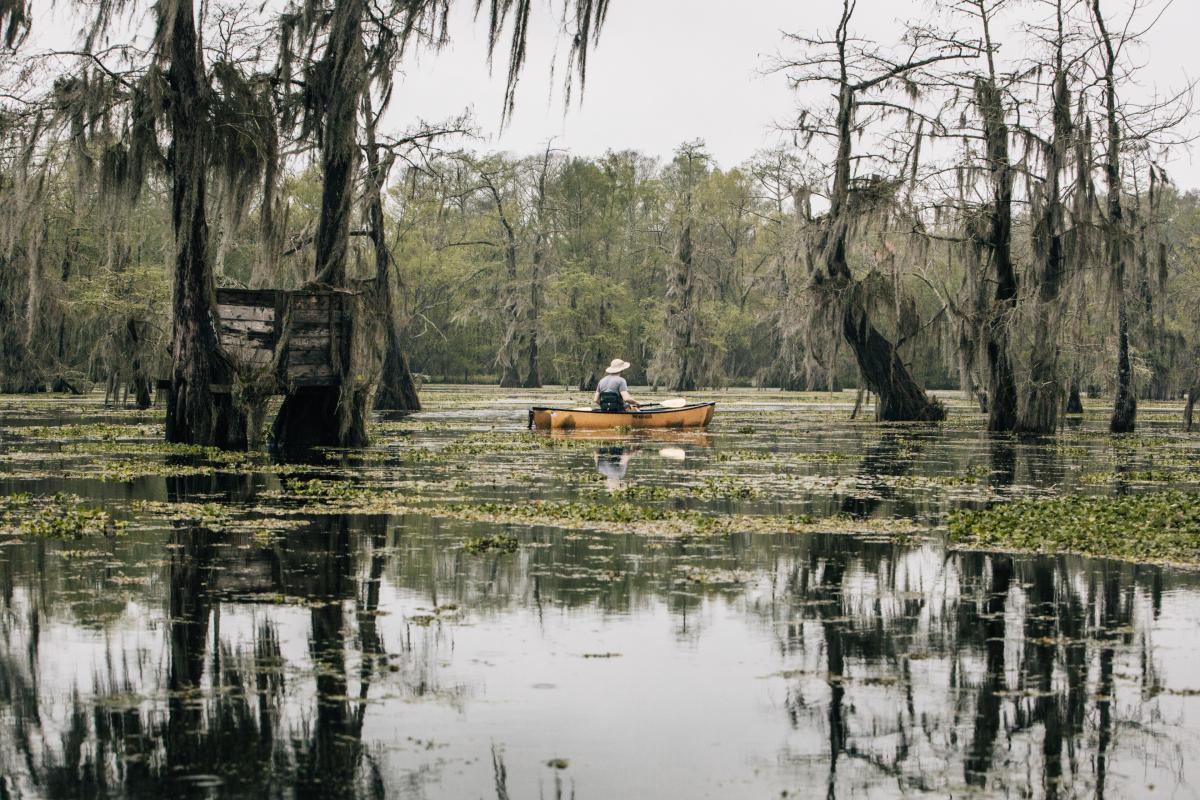 Bayou Vermilion Excursion: Lake Martin