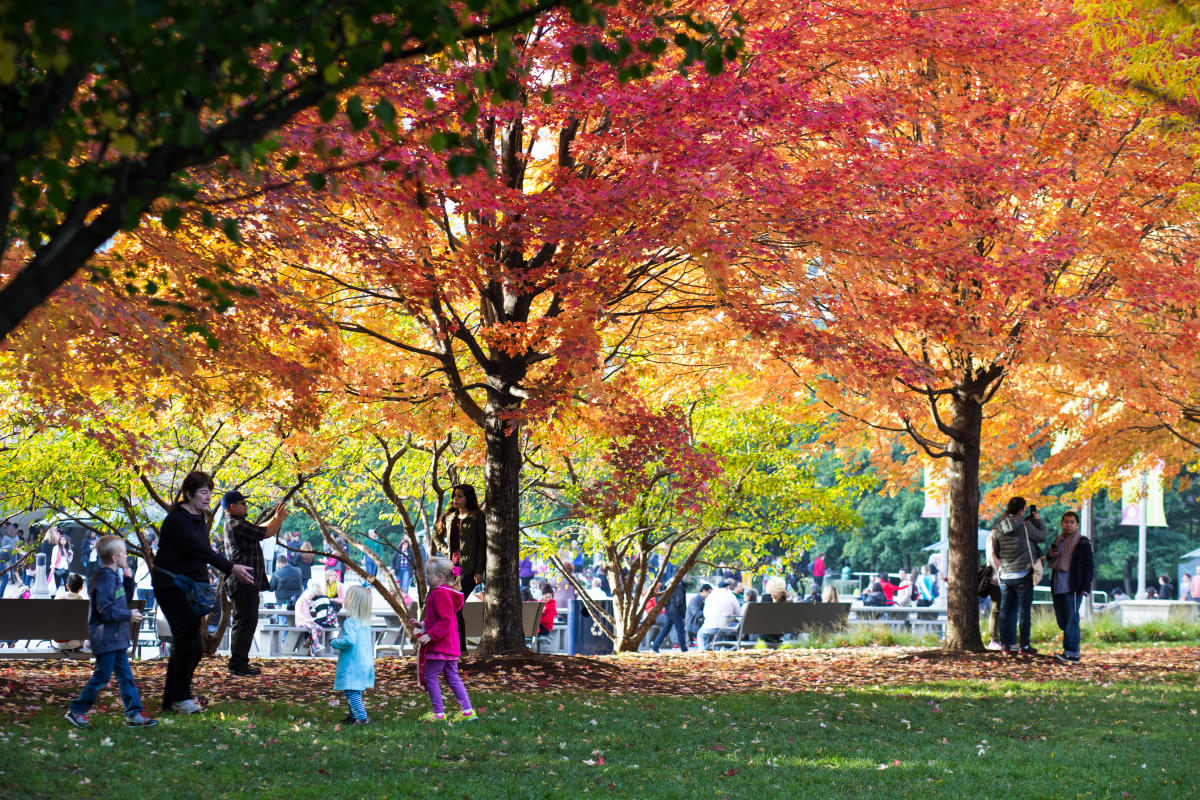 Millennium Park Chicago in the Fall