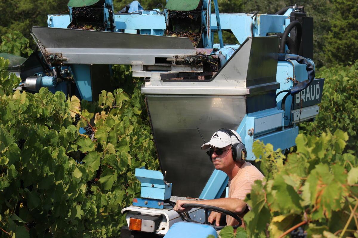 Harvest on the Bucks County Wine Trail