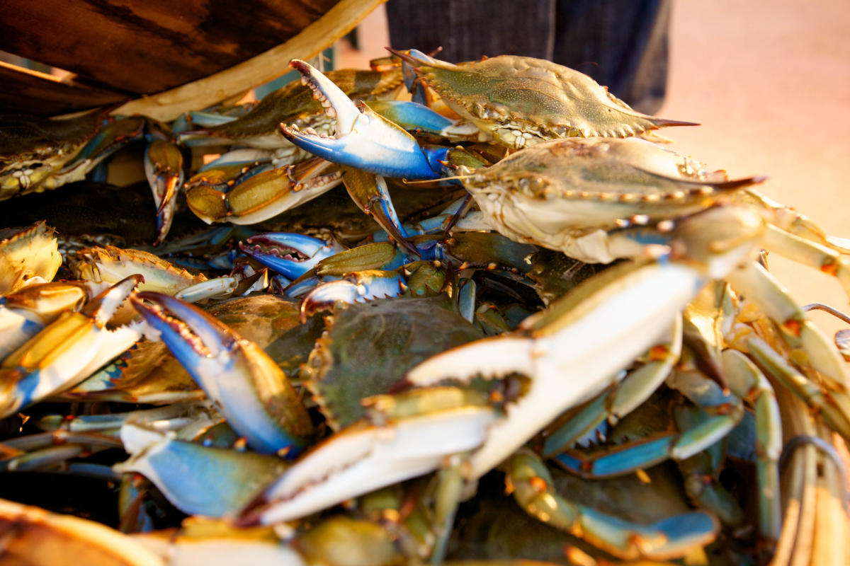 2013_Crab_Feast_Crabs_1.jpg