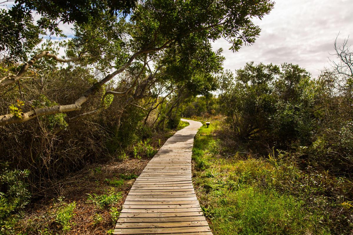 Outdoors - Parks - Back Bay National Wildlife Refuge - 0U7A9001 copy.jpg