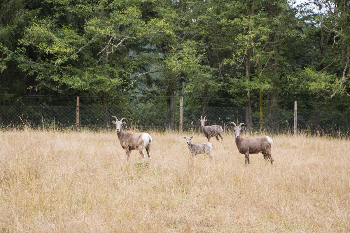 Keeper Adventure at Northwest Trek Wildlife Park