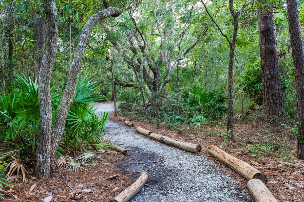 The John Gilbert Nature Trail winds through ancient maritime forest on St. Simons Island, Georgia