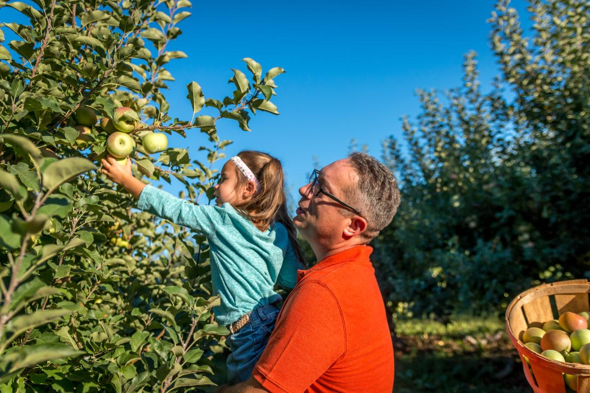 Outdoors-Harvesting @ Strites Orchard(4)