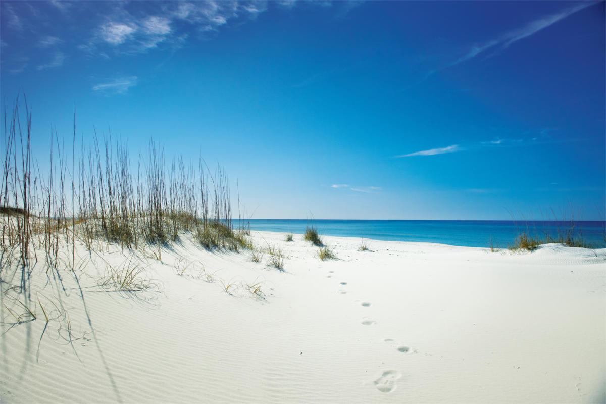 shell island gulf of mexico panama city beach florida