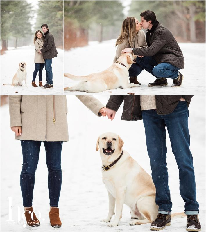 Collage of winter engagement photo shoot on Avenue of the Pines with dog