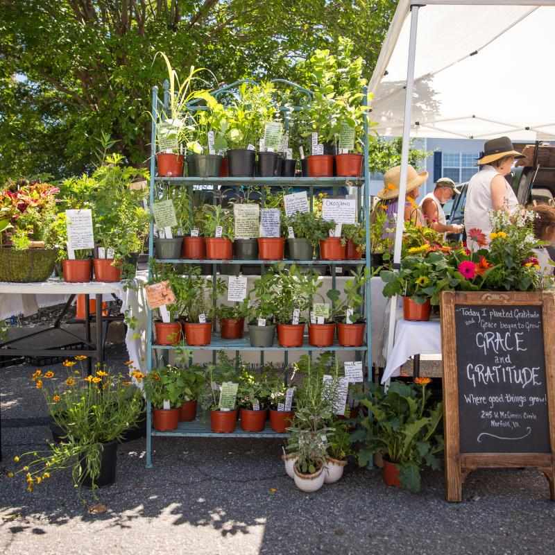 Arts & Culture - ViBe Creative District - Old Beach Farmers Market - Old Beach Farmers Market 13.jpg