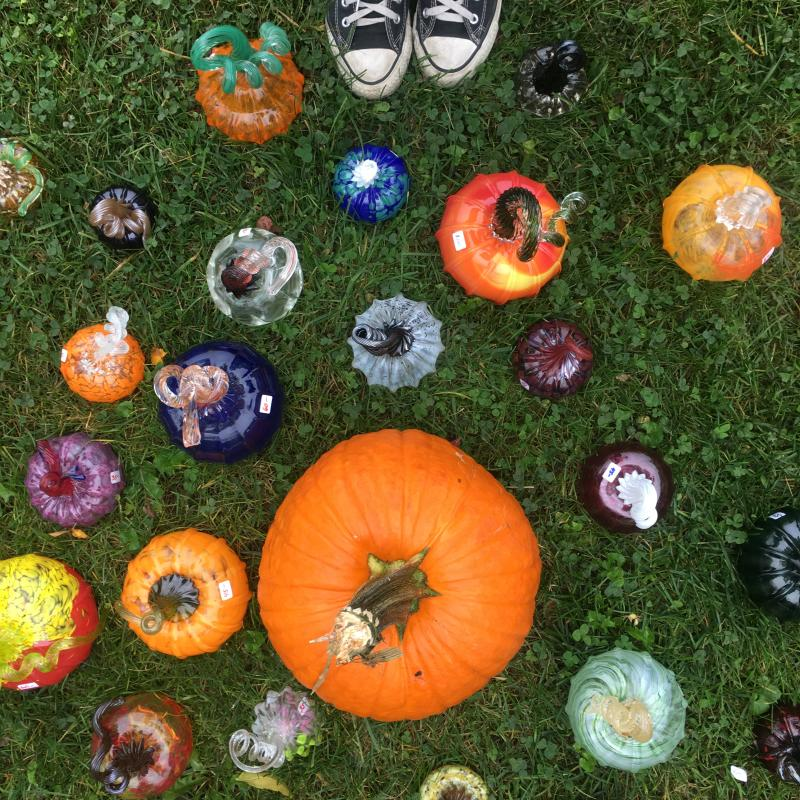 great glass pumpkin patch