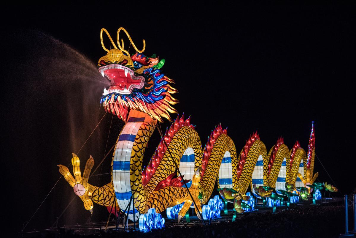 Chinese Lantern Festival Dragon