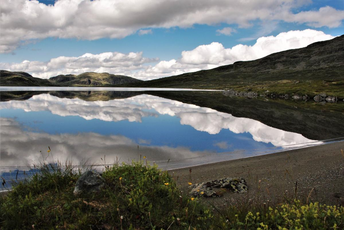 Vealie-Versjøen, Ål i Hallingdal