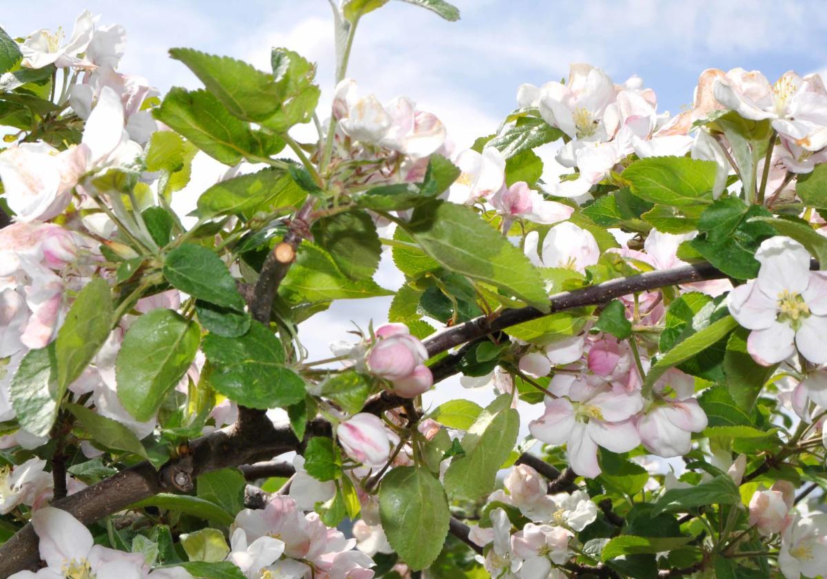 Epler fra Bygland