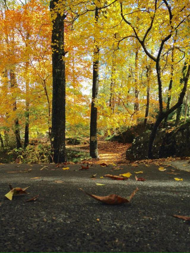 Noccalula Falls Foliage