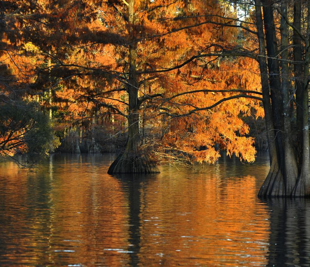 Stumpy Lake Natural Area