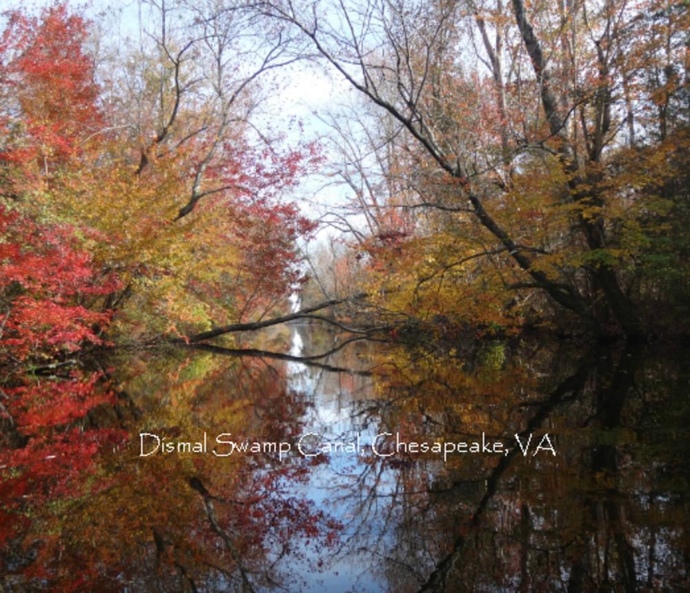 Fall_Leaves_Dismal_Swamp_Canal-5600.jpg