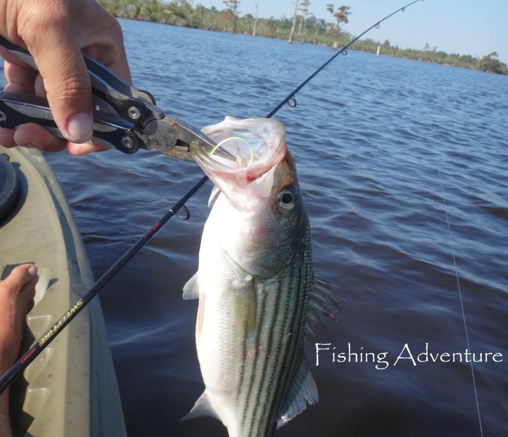 Fishing_Adventure_2.jpg