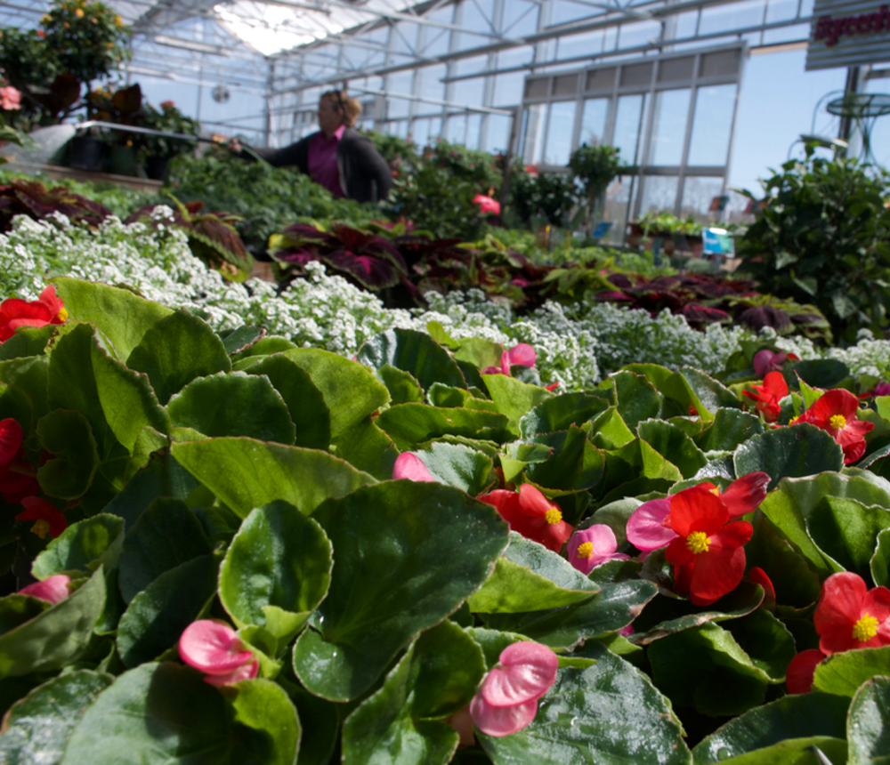 Anderson's Greenhouse