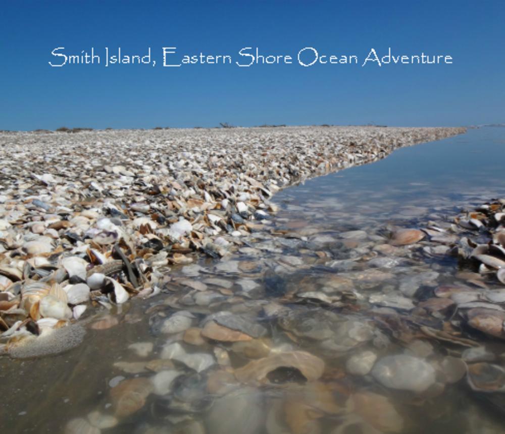 Smith_Island_Shells-5600.jpg