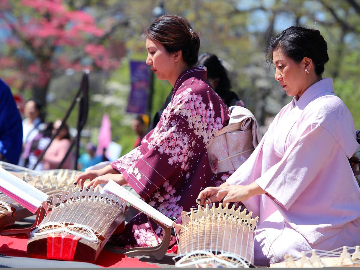 Cherry Blossom - Festivals