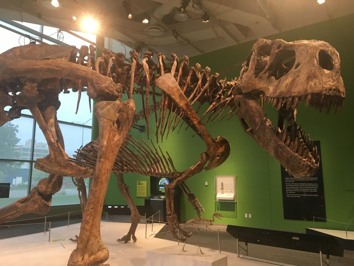 Tyrannosaur - Science Center of Iowa