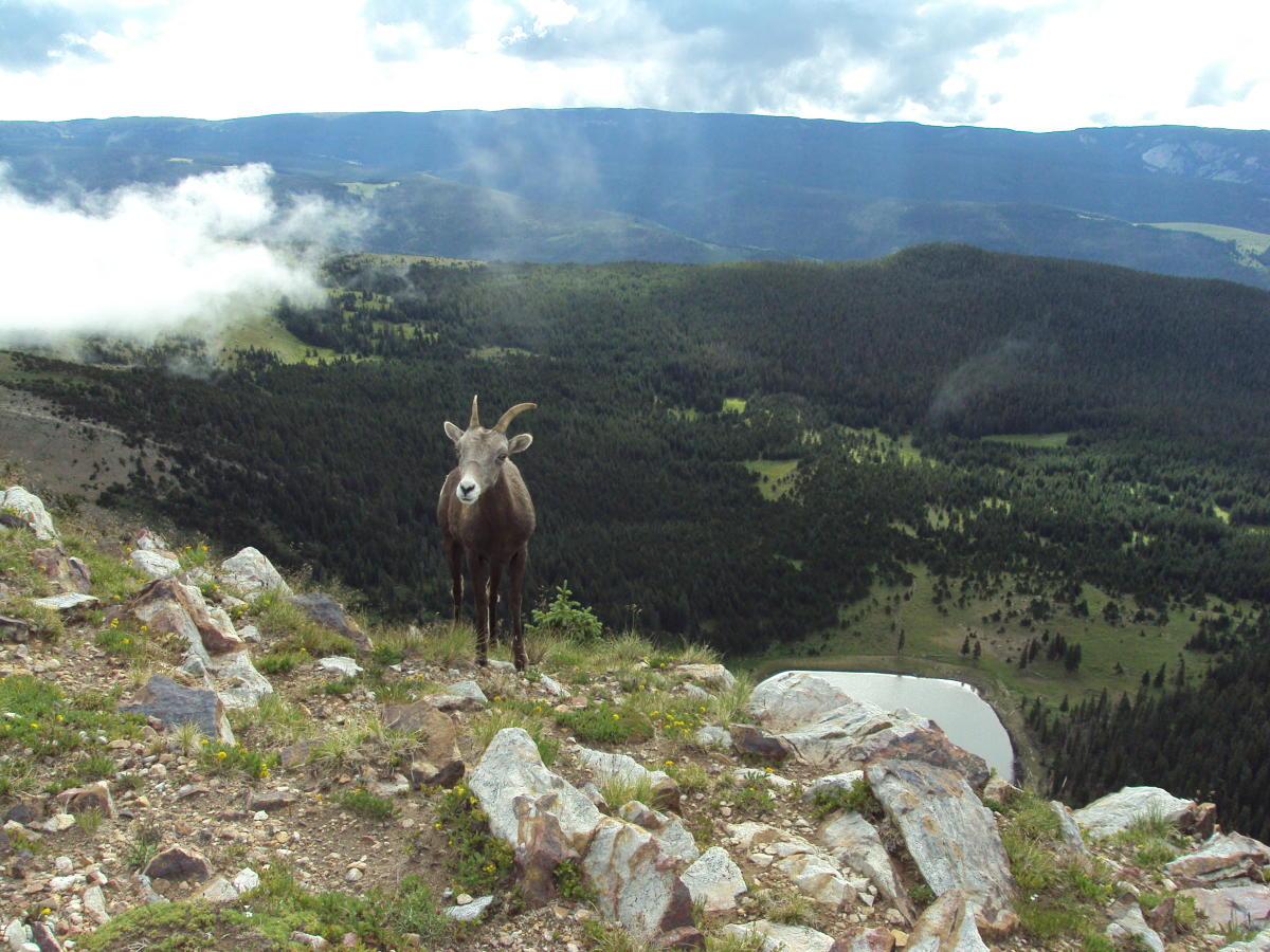 Santa Fe Wilderness