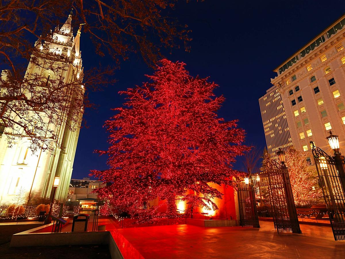 Temple Square's Cedar of Lebanon shouldn't be missed