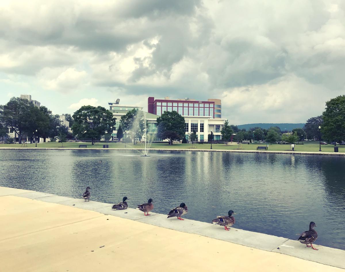 Lucky Duck Scavenger Hunt ducks in a row