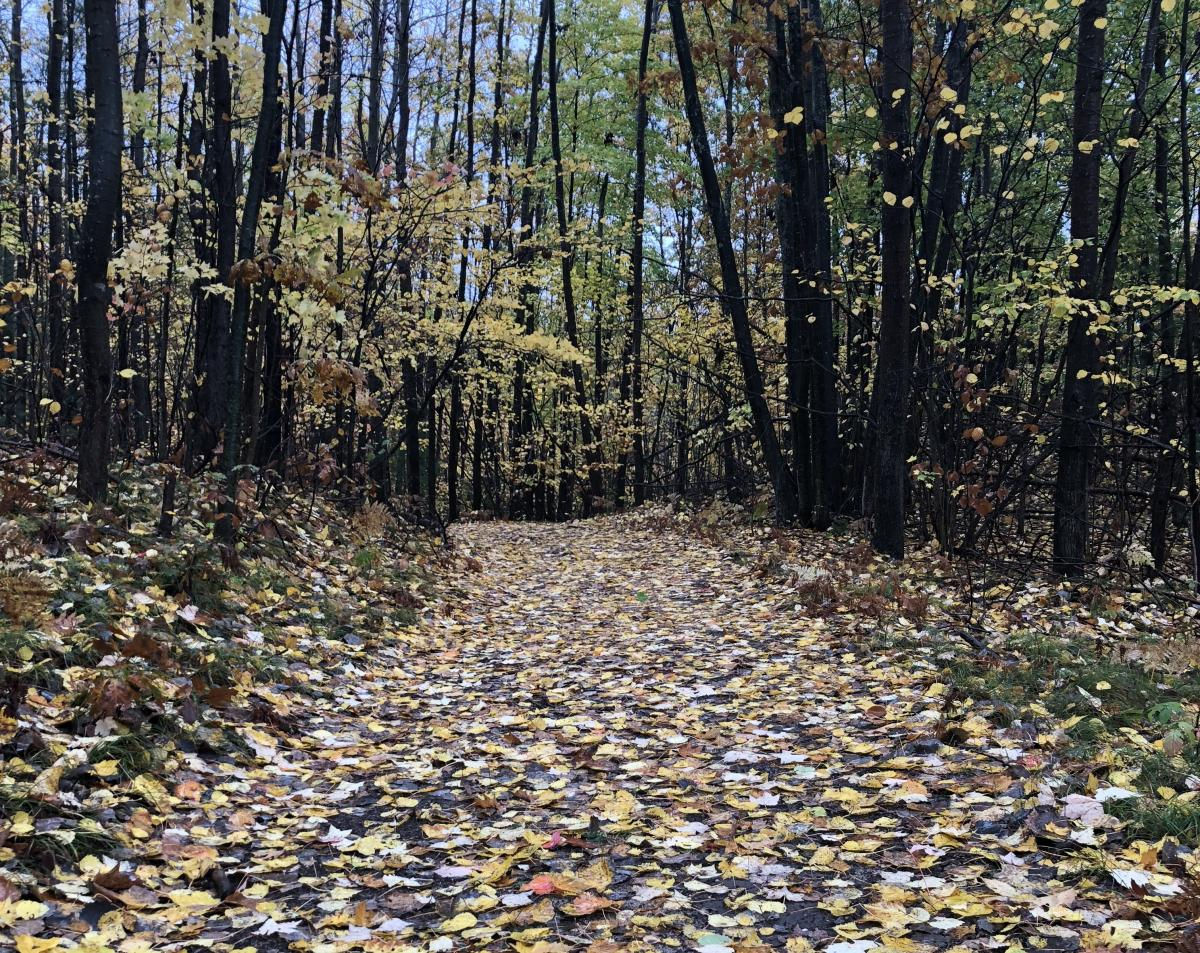 Trails for Running