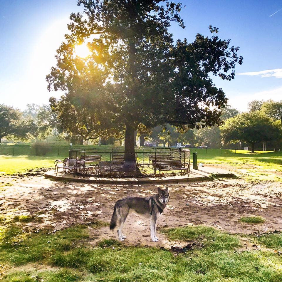 Raising Cane's Dog Park