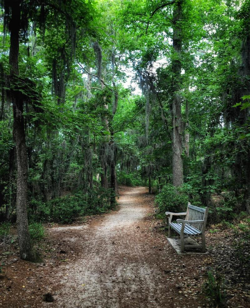 Cape Henry Trail