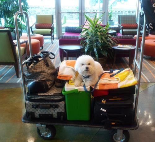 Pet Friendly Hotels: Indigo