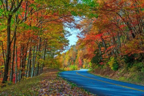 2014 Fall Color Milepost 399
