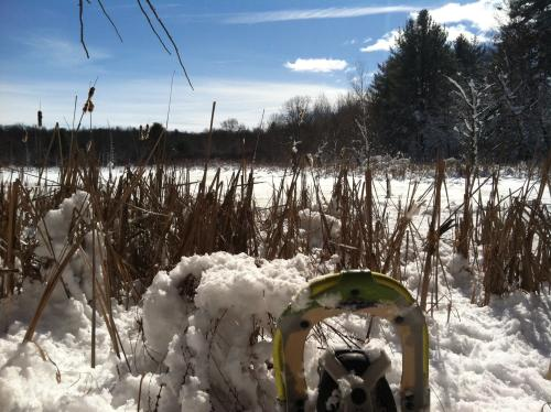 Snowshoeing in Grand Rapids