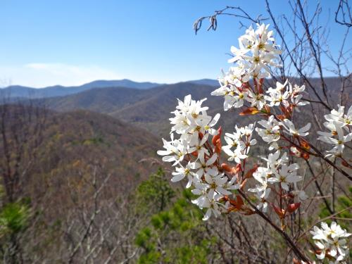 Lookout Mountain Trail in Montreat