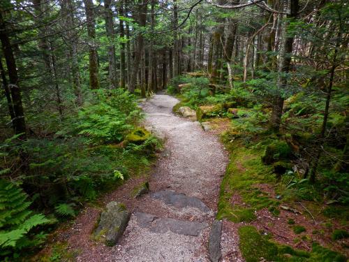 Deep Gap Trail