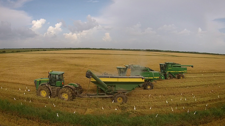 combines in rice field