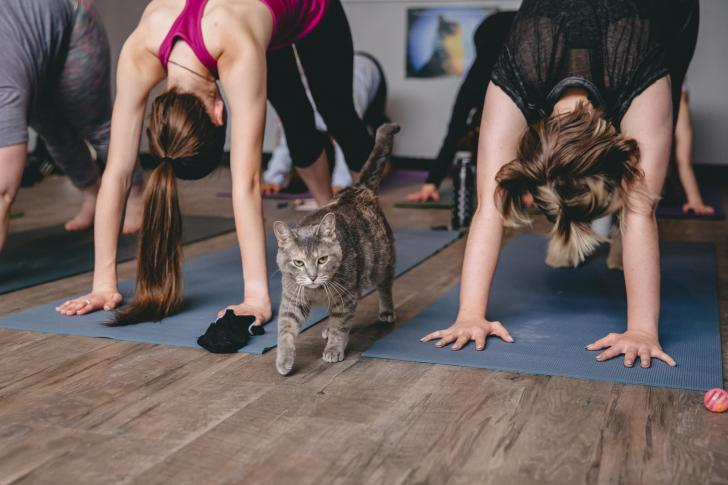 Cat with Yoga class at Happy Cat Cafe in Grand Rapids, Michigan