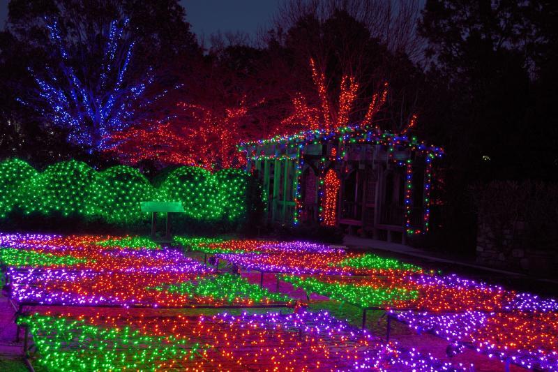 Winter Lights at the Arboretum