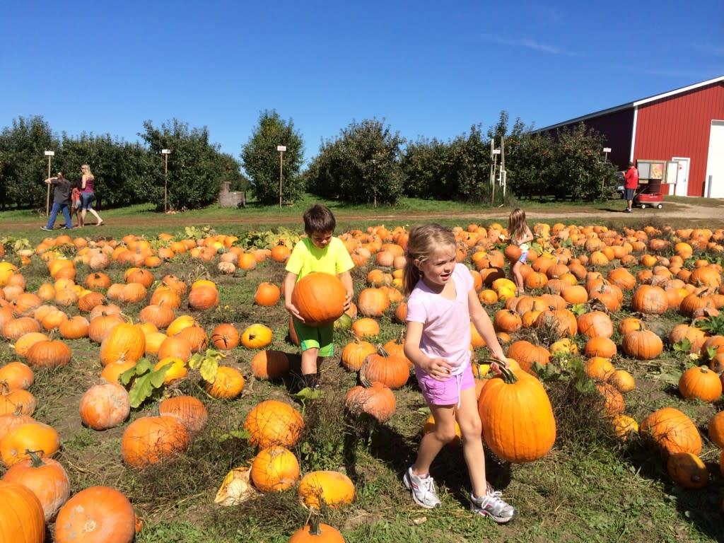 Kids picking pumpkins in Grand Rapids, Michigan