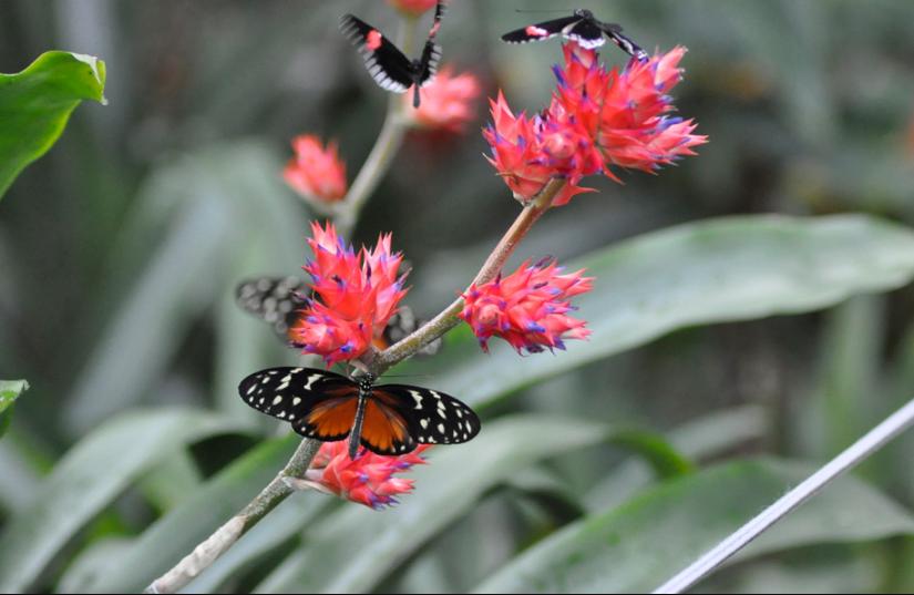 Fred & Dorothy Fichter Butterflies Are Blooming | Children's Activities in Grand Rapids, MI