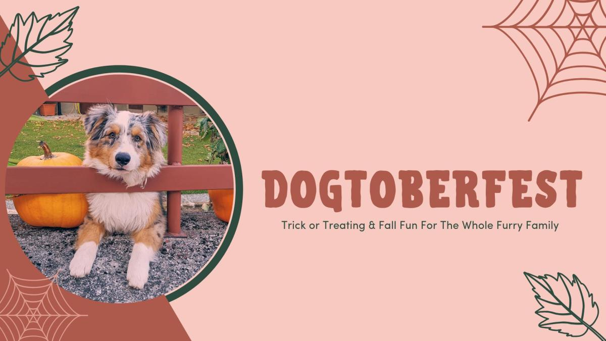 Dogtoberfest   Fall Harvest/Halloween in Grand Rapids, MI