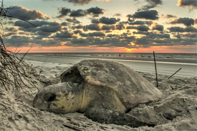 Tipping the Scales: Sea Turtle Research & Reptile Citizen Science